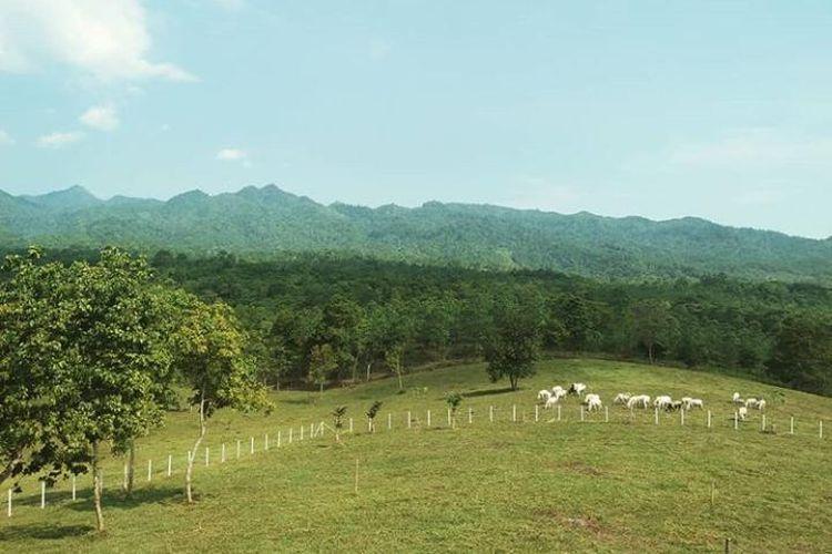 Wisata Di Bukit Waruwangi