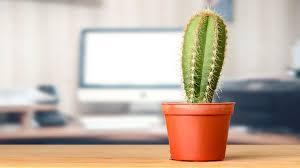 beberapa manfaat dari kaktus untuk kesehatan tubuh kita